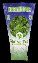 Grüne Fee koriander